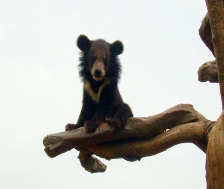 韩国旅游:无忧爱美网体验熊熊木乐园